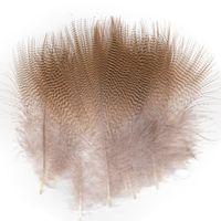 Plumas Pato del Bosque 2