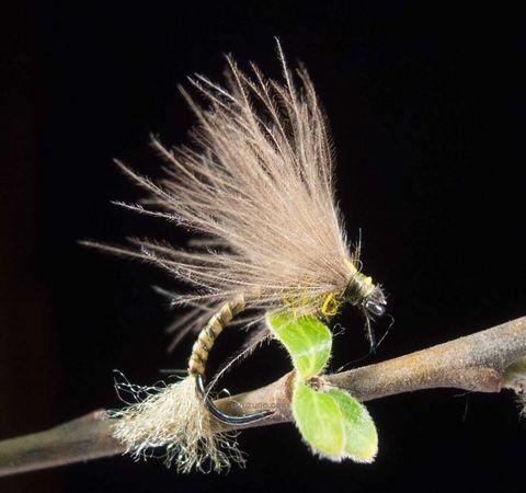 Emergente U22 mosca oliva urruzuno