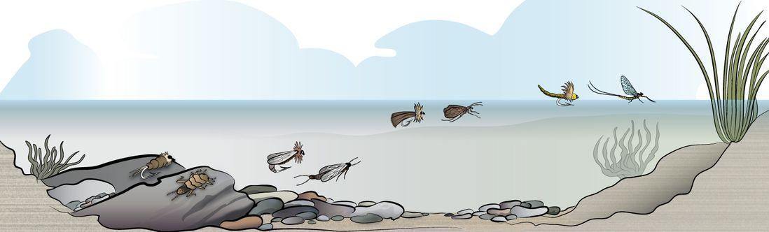 Moscas de pesca