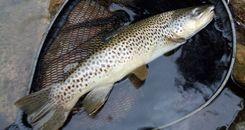 Joxe Mari Zendoia campeón del II Open de pesca a mosca seca
